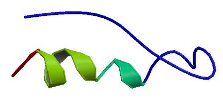 Пептид YY (пептид тирозин-тирозин)