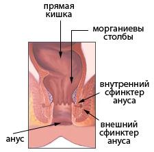Анальный Проход Фото