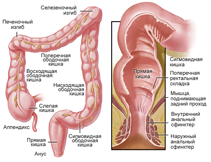Клазмоцит