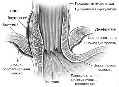 Урологическая александровская больница в киеве