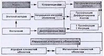 Рис. 1. Нарушения клеточного обновления